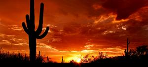Saguaro Sunset (small 2)